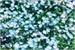 Fanfic / Fanfiction Stuck in this Blue Garden(Vkook)