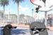 Fanfic / Fanfiction Os pombos da Praça