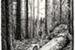 Fanfic / Fanfiction Na floresta