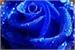 Fanfic / Fanfiction Rosa azul