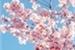 Fanfic / Fanfiction A primavera em que te conheci- Min Yoongi