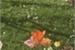 Fanfic / Fanfiction Jardim das belas flores