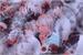 Fanfic / Fanfiction Slaps And Kisses - JuHyunRic - JuJaeRic