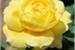 Fanfic / Fanfiction Depois da rosa amarela