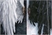 Fanfic / Fanfiction Anjos e demônios (jikook)