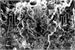 Fanfic / Fanfiction Saint Seiya: Titanomaquia