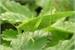 Fanfic / Fanfiction Tettigoniidae