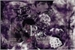 Fanfic / Fanfiction Púrpura - Jeon Jeongguk