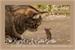 Fanfic / Fanfiction As Fabulosas Aventuras de Margot e A Gata Triste