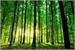 Fanfic / Fanfiction Floresta magica (interativa)