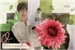 Fanfic / Fanfiction O florista