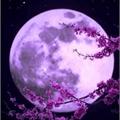 Usuário: Moon-Moonlight