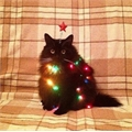 Usuário: Magic_Kitty