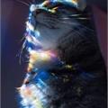 Usuário: Cat_Say_Meow
