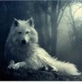 Usuário: familywolf