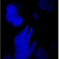 Usuário: lillith_klm