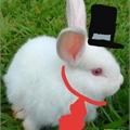 Usuário: Rabbit-San