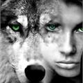 Usuário: WolfBlack-