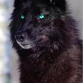 Usuário: Wolf--black