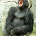 Usuário: GorilaPorra