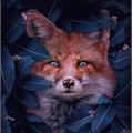 Usuário: FireFox250