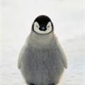 Usuário: Pinguimfc123