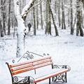 Usuário: Snowland