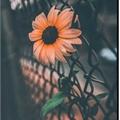 Usuário: FlorSecreta
