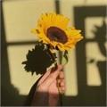 Usuário: equipe-sunflower
