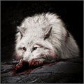 Usuário: apollowolf