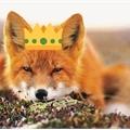 Usuário: FoxyMPrince
