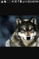 Usuário: NightmareWolf_