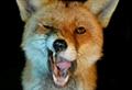 Usuário: Big_Fox_Crazy