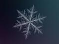Usuário: Winter_hiver