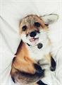 Usuário: raposinha-157