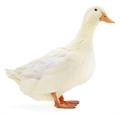 Usuário: OrdinaryDuck