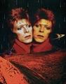 Usuário: Bowiezinha