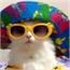 Perfil cat_sexy