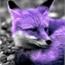 Perfil _PurbleFox_