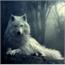 Perfil familywolf