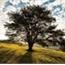 Perfil i_am_a_tree