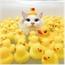 Perfil Omg_Miss_Swan