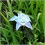 Perfil smeraldacoreana