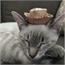 Perfil gatos_felizes