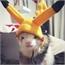 Perfil lontra_wisepoh