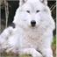 Perfil Wolftako