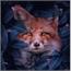 Perfil FireFox250