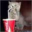 Perfil coca-suco