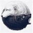 Perfil moon-astradys