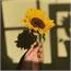 Perfil equipe-sunflower